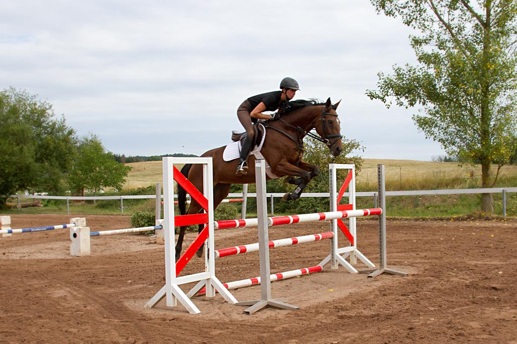 Thoroughbred For Sale Mare Bay 8 Years In Romhild Thuringen Germany Caballo Id Ha046731 Caballo Horsemarket