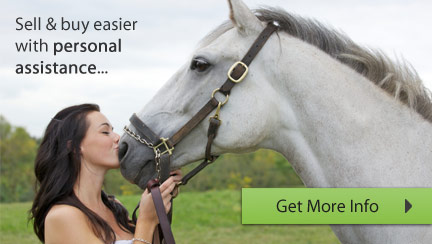 Caballo Horsemarket - Your personal horse agent