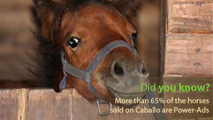 Did you already know? 65% of the horses sold on Caballo are Power-Ads.